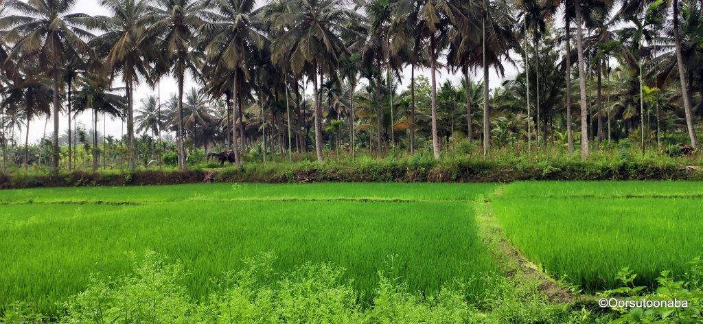 Green fields after HN Pura