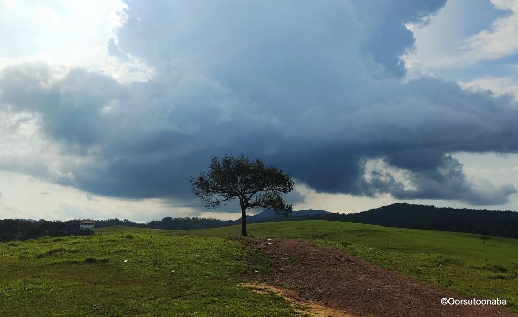 Lone Tree at Hethur