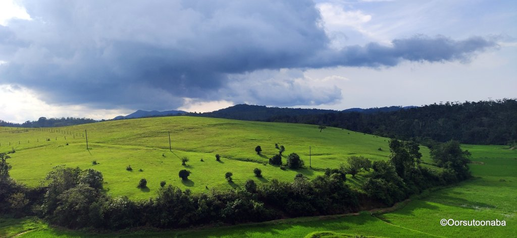 View of grasslands from Lone tree at Hethur